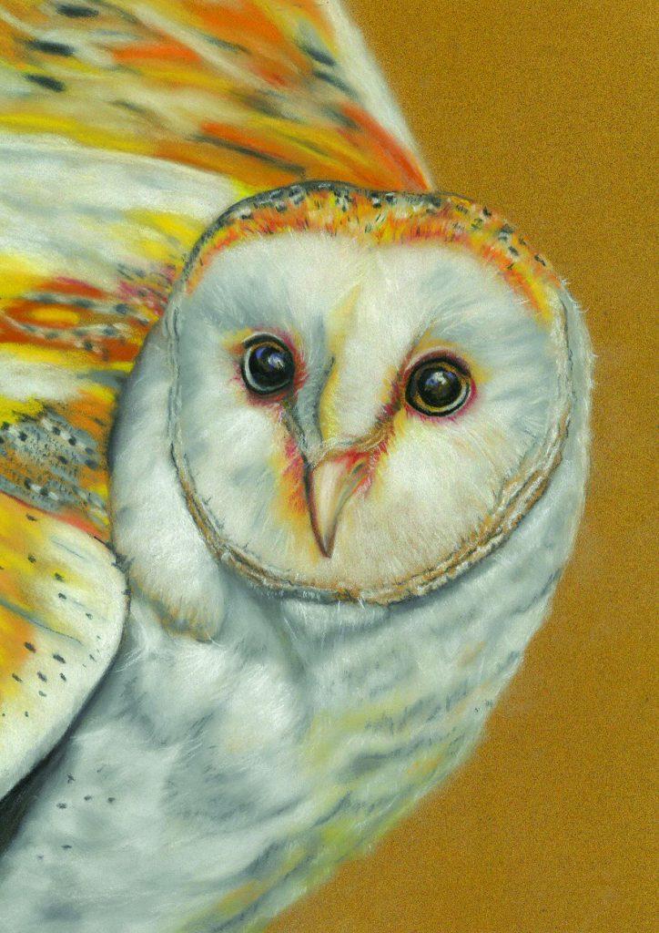 Barb Ralph - Barn Owl